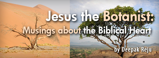 Jesus the Botanist - Musings about the Biblical Heart